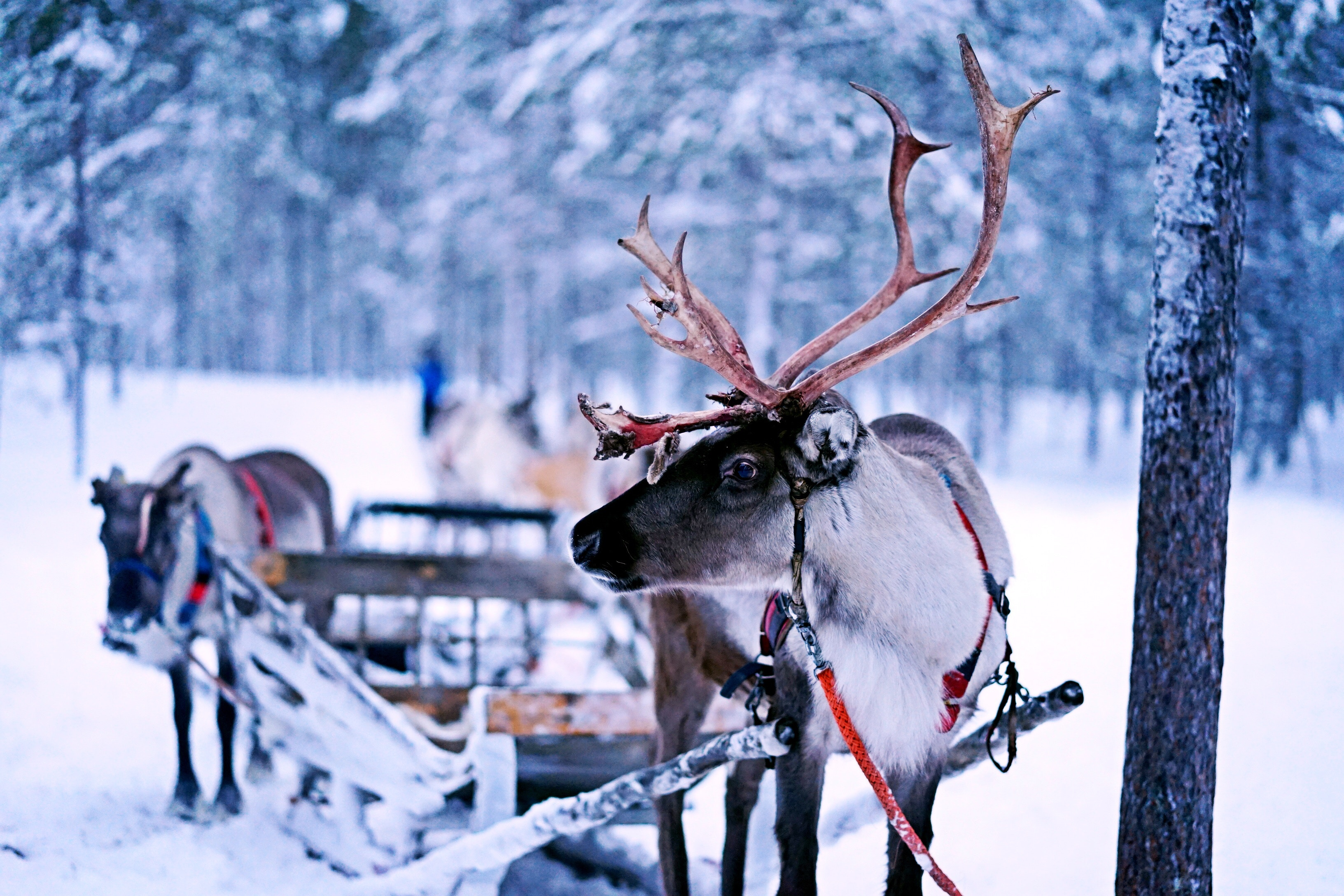 open company in Finland